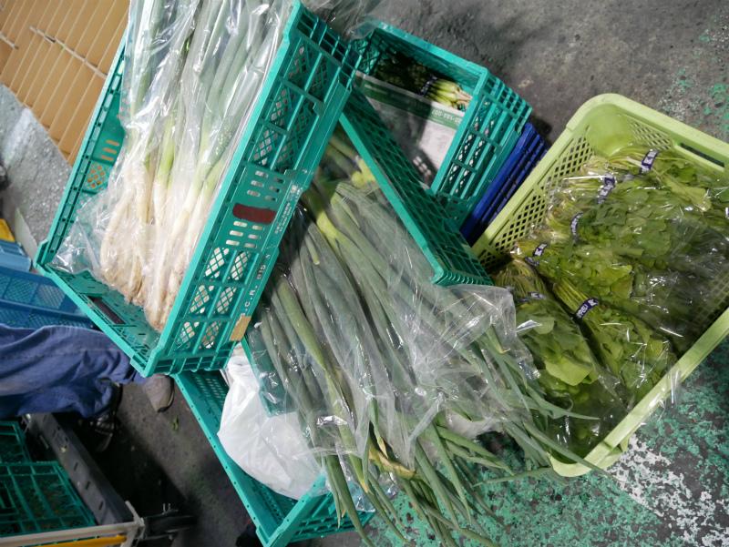採れたての鎌倉野菜